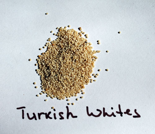 Opium Poppy var. Turkish Whites 2g